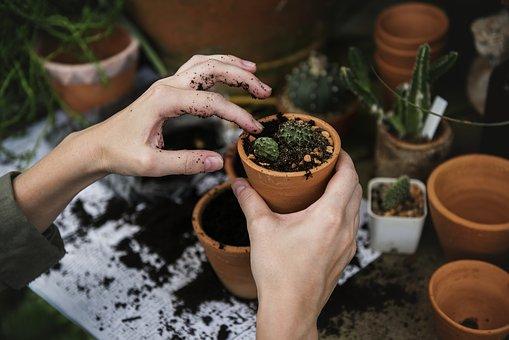 plantation des petites plantes et semis