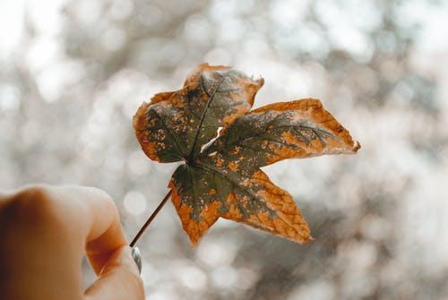 main-qui-tien-une-feuiile-d'arbre