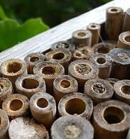 bambous-bouchés-par-des-abeilles-sauvages